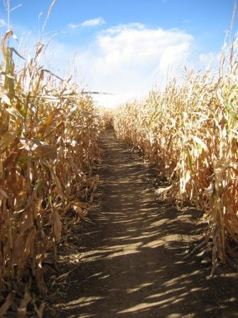 Maze pathway.